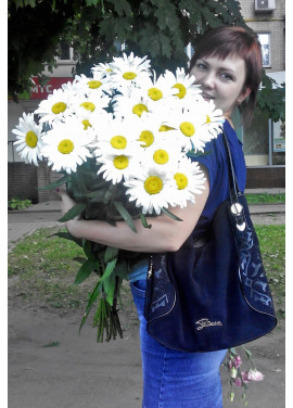 Bouquet of camomiles