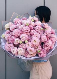 Pink eustoma