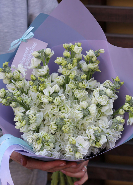 Bouquet of white mattiolla