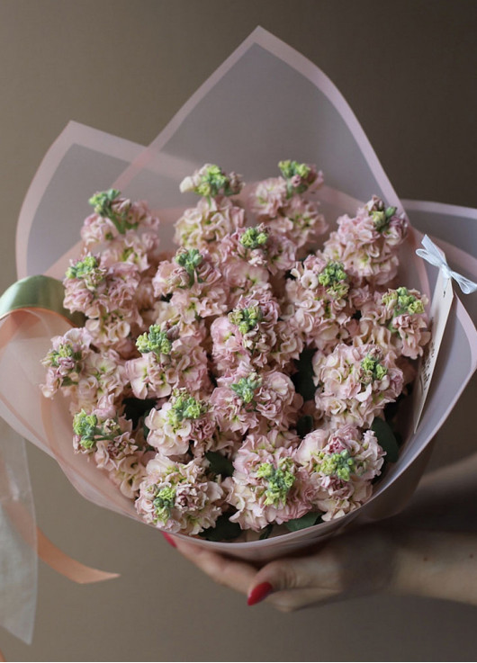 Bouquet of cream mattiolla