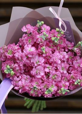 Bouquet of pink mattiolla