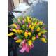 Rainbow spring 101 tulips