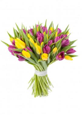 51 multicolored tulips