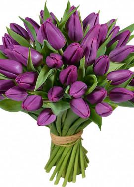 Bouquet of 51 violet tulips