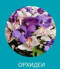 купить орхидею в Днепр, Днепропетровск