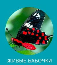 Живые бабочки купить Днепр